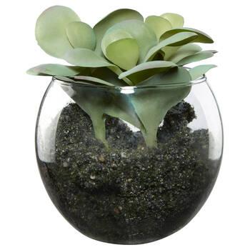Succulent Plant in Glass Pot