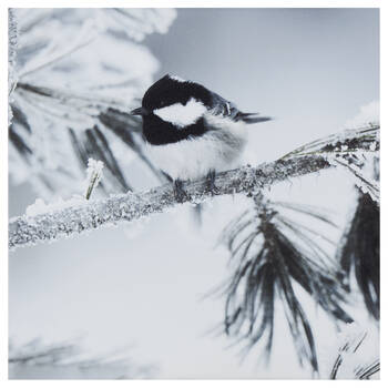 Perched Chickadee Printed Canvas
