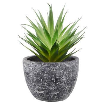 Plante grasse en pot en ciment
