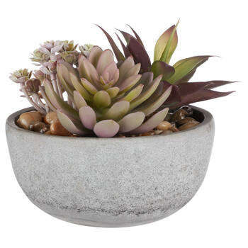 Mix of Succulents in Cement Pot