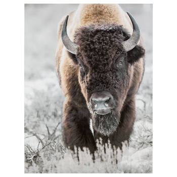 Bison Printed Canvas