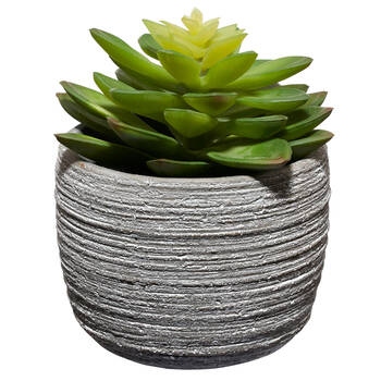 Succulent in Textured Cement Pot