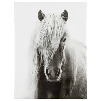 Icelandic Horse Printed Canvas