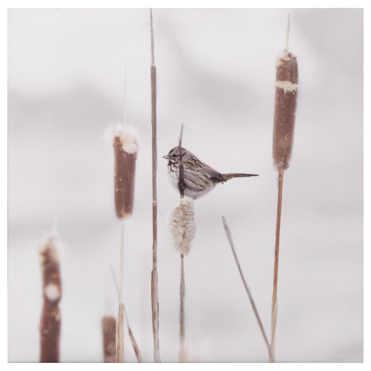 Bird & Cattail Printed Canvas