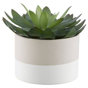 Succulent in Two-Toned Ceramic Pot