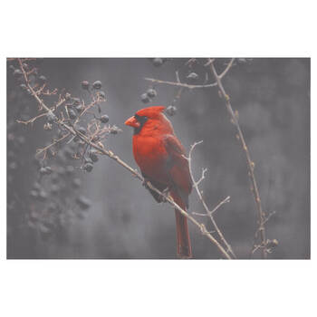 Perched Cardinal Printed Canvas