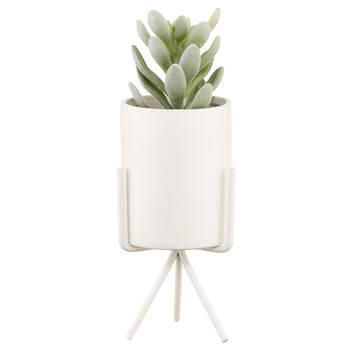 Succulent avec pot de céramique
