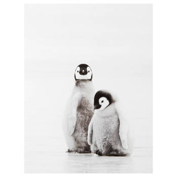 Pair of Penguins Printed Canvas