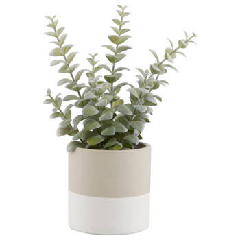 Apple Succulent in Two-Toned Ceramic Pot