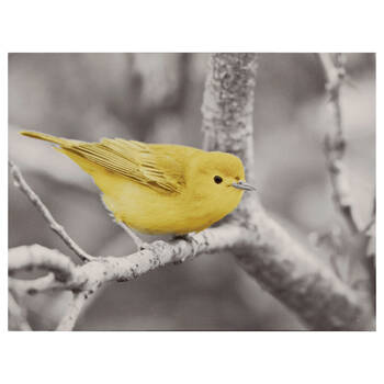 Bird on a Branch Printed Canvas