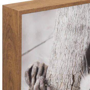 Racoon Printed Framed Art