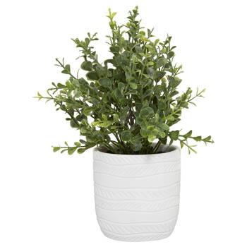 White Ceramic Potted Plant