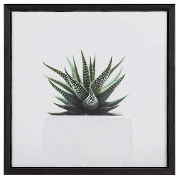Succulent In Pot Printed Framed Art