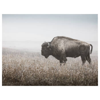 Bison Profile Printed Canvas
