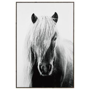 Icelandic Horse Framed Art
