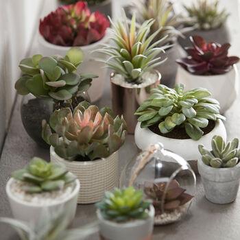 Plante succulente dans pot en ciment texturé