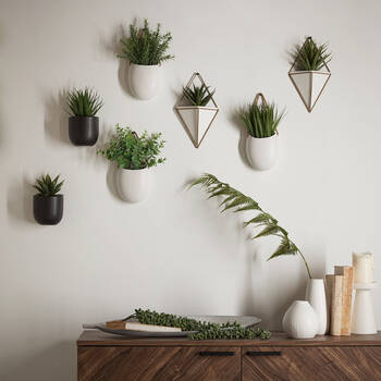 Plante succulente avec pot en céramique