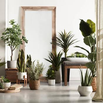 Aloe in Ceramic Pot