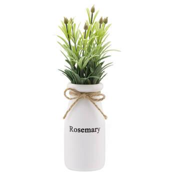 Rosemary in White Ceramic Pot
