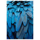 Macaw Feathers Printed Canvas