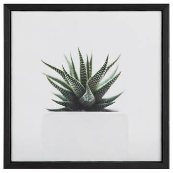 Succulent In Pot Printed Framed Art
