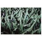 Green and Purple Foliage Printed Canvas