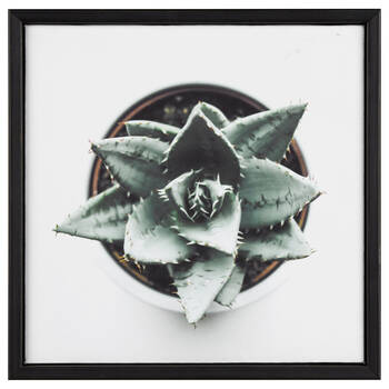 Succulent From Above Printed Framed Art