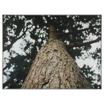 Grand Tree Printed Framed Art