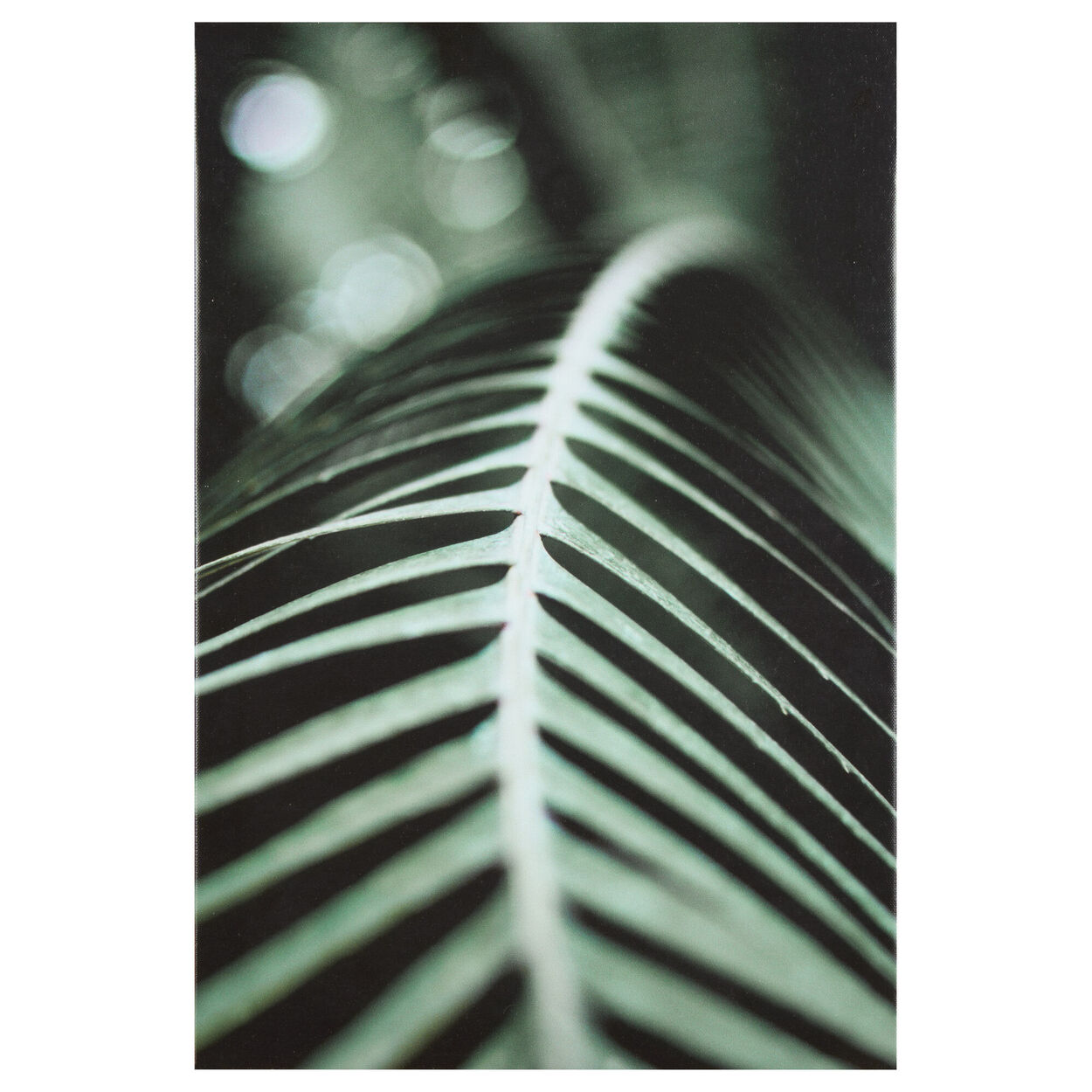 Tropical Leaf Printed Framed Art