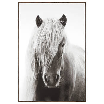 Icelandic Horse Framed Printed Canvas