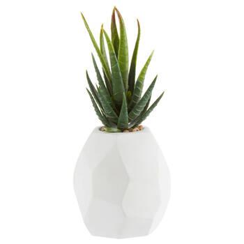 Decorative Potted Succulent