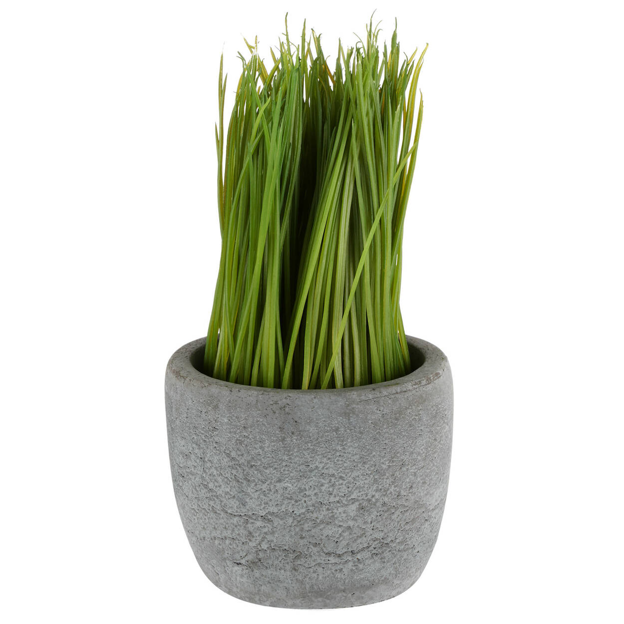 Grass in Cement Pot