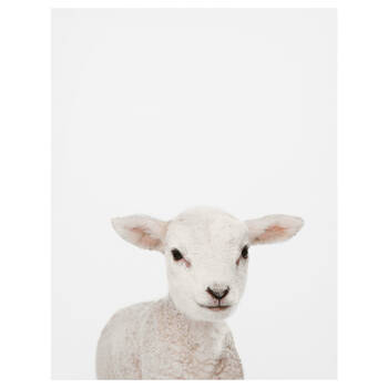 Baby Sheep Printed Canvas