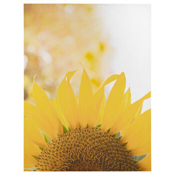 Sunflower Printed Canvas