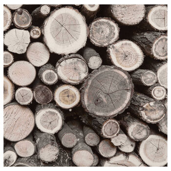 Birch Logs Printed Canvas