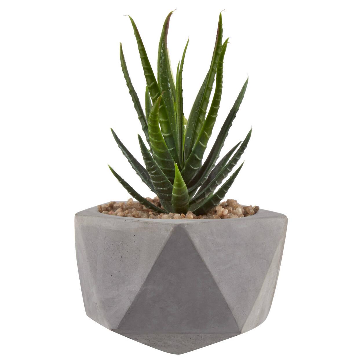 Plante grasse avec pot en ciment g om trique - Deco plante grasse ...