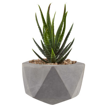 Succulent Plant in Geometric Cement Pot