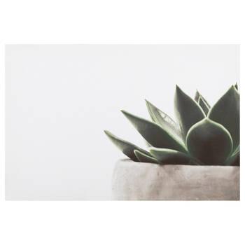 Aloe Plant Printed Canvas