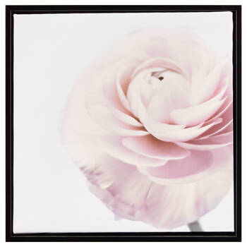 Pink Petals Framed Art