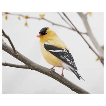 Perched Bird Printed Canvas