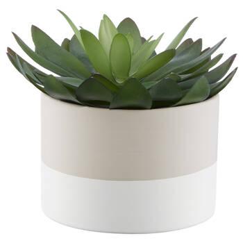 Plante succulente dans un pot en céramique à deux tons