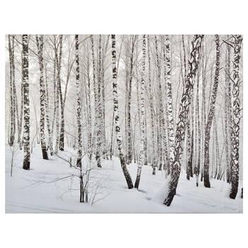 Birch Forest Printed Canvas