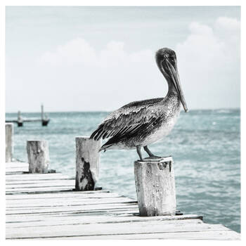 Pelican on Dock Printed Canvas