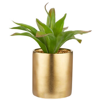 Agave in Ceramic Pot