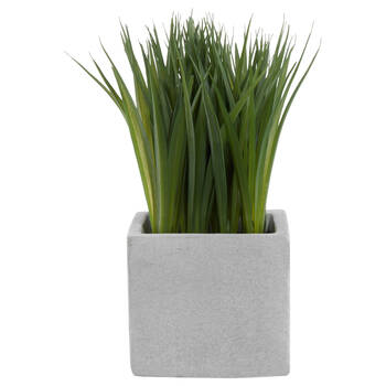 Grass in Cement Pot