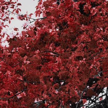 Gel Embellished Blossom Tree Printed Canvas