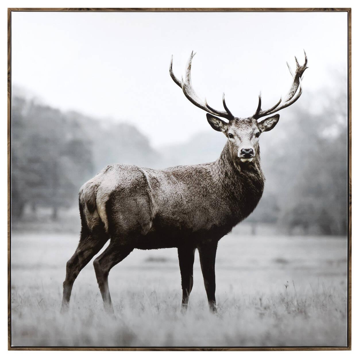 Tableau imprimé d'un cerf majestueux