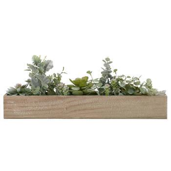 Succulents in Wooden Pot