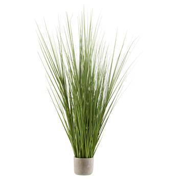 Grande herbe en pot de ciment