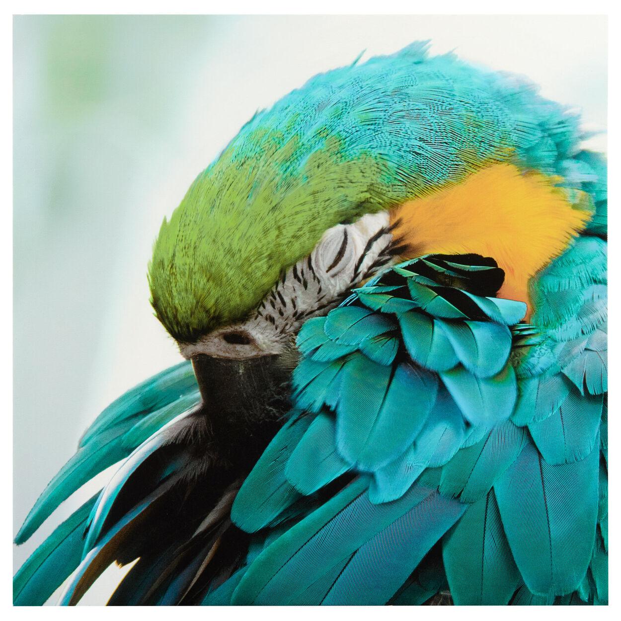 Sleeping Macaw Printed Canvas